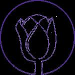 Luxe B&B De Paarse Tulp